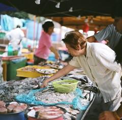 (thundered cat) Tags: fish film square market shrimp hasselblad squid 500cm pasarmalam stinks