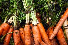 Carrot, Farmers Market / 20090828.10D.52167.P1 / SML