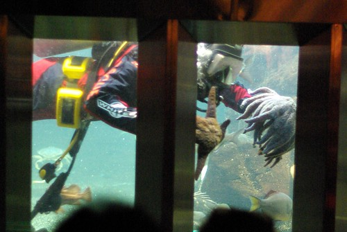 2009-08-26 Undersea Gardens (24)