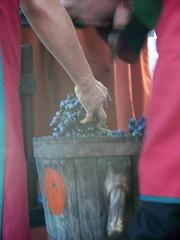 El fruit de les vinyes