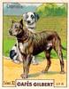 gilbert chiens009