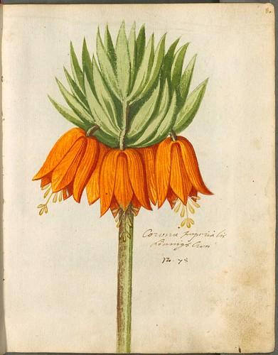 Hortulus Monheimensis 00027