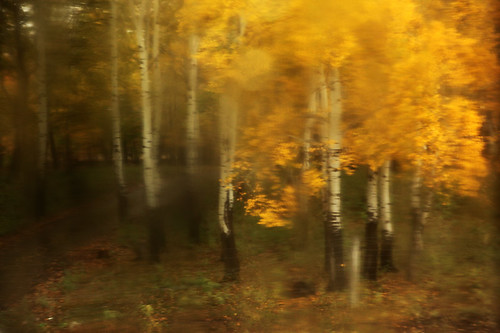 IMG_1781-w1 Blur