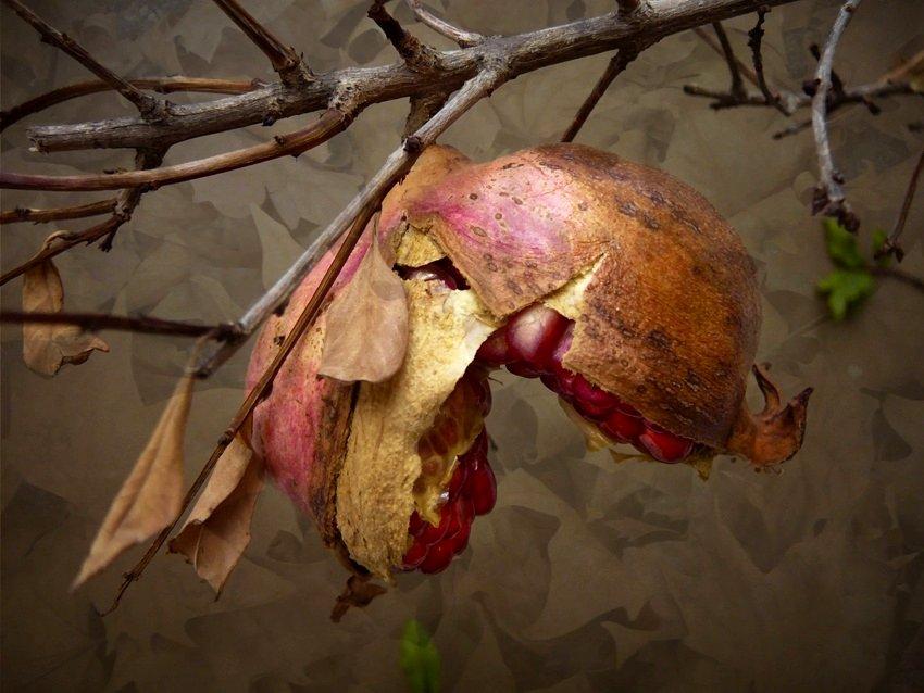 Fruto del otoño (Autumn Fruit)