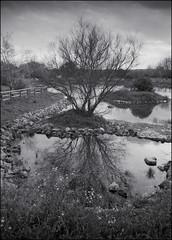 El estanque (Santhero) Tags: blackandwhite bw slr film analógica iso400 arf sd m42 135 praktica manualfocus film35mm réflex a49 mtl5b argenti fotografiaanalogica pentacon29mm28 globulaaward argentireporter santhero fotosanthero