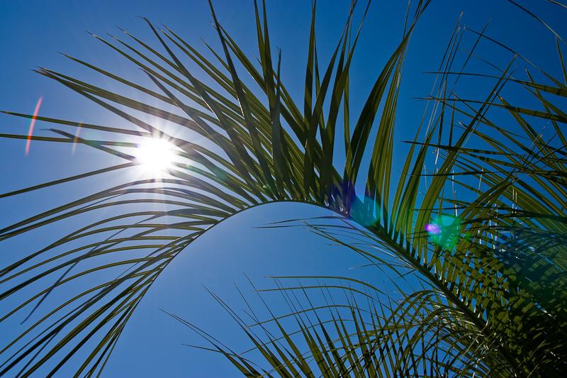 IMAGE: http://farm3.static.flickr.com/2438/3533041740_a517fed072_o.jpg