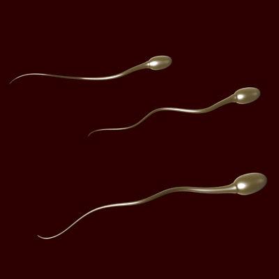 sperm 01
