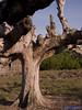 Kahoy (erurokun (Eror Cusap Photography)) Tags: cleevillasor alvinarzaga philcalumpang erorlavistecusap