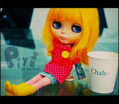 [ ADAW 25 / 52 ] : enjoying Chaho
