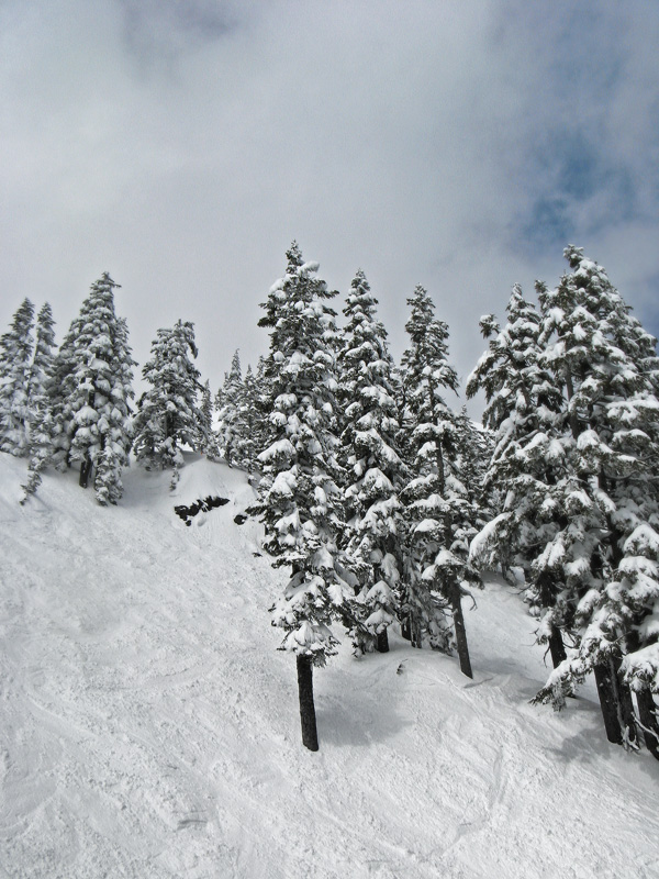 Trees-at-Alpental_1106