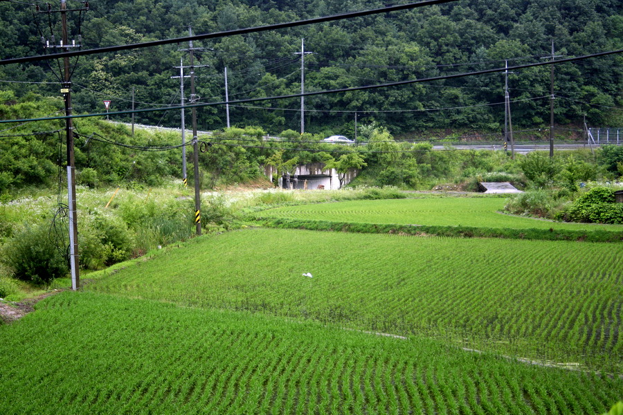 Rice paddy in mountaneous area