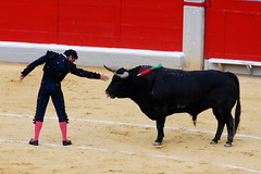 Tarde de Toros 2. Dominio (pasotraspaso. Jesus Solana Fine Art Photography) Tags: red yellow photography spain rojo nikon europe photos toros bullfight pasion valor dominio alvero coraje fandi nikond80 aplusphoto pasotraspaso jesussolana gettyimagesspainq1