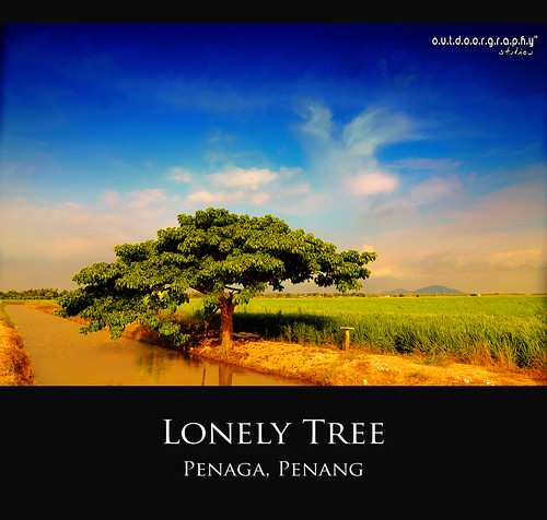 Lonely Tree Series #4 (HDR)