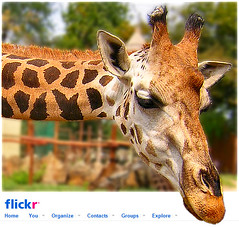 Hi Flickr! / Hell Flickr! (FuNS0f7) Tags: animal giraffe nikoncoolpix2100 welcometoflickr outofbounder
