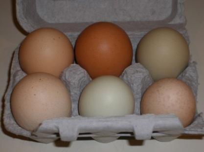 CSA Eggs