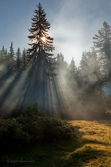 Sunbeams (Evgeni Dinev) Tags: morning trees summer sun mountain vertical pine forest sunrise smoke bulgaria  sunbeams   rhodopes      beglika     golyambeglik