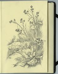 Burdock (Yaroslav Gerzhedovich) Tags: bw plant art moleskine nature illustration rural pencil paper sketch blackwhite leaf drawing picture burdock japanesealbum yaroslavgerzhedovich