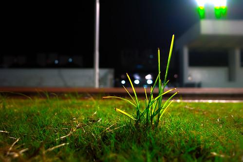 操場上的小草兒