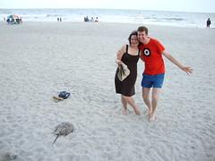 Us and horseshoe crab