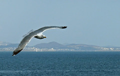 (ssj_george) Tags: leica city blue sea white black mountains bird water ferry port lumix grey harbor boat fly flying flight athens panasonic greece gul seagul hovering piraeus pireaus pireas       fz28 ssjgeorge