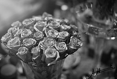 ..     (A.A.A) Tags: roses white 3 black love rose by canon photography mark iii n to iloveyou dedicated aaa amna  irresistible eos1ds jetaime abdulaziz althani canoneos1dsmarkiii a7ebek3 allrightsreservedamnaaalthani