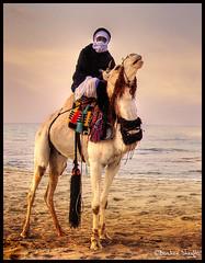 How Far is the Desert from Here ? (Bashar Shglila) Tags: beach sahara festival desert camel libya tripoli  touareg    libyen    lbia   libi libiya superaplus aplusphoto  liviya ghadamis  libija         lbija  lby libja lbya liiba livi