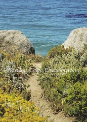 Carmel, California (bevilled edge photography) Tags: california beach carmel pathway carmelbeach oceanpathway californiaimages carmelpathway