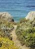 Carmel, California (bevilled edge photography) Tags: california beach carmel pathway carmelbeach oceanpathway californiaimages carmelpathway