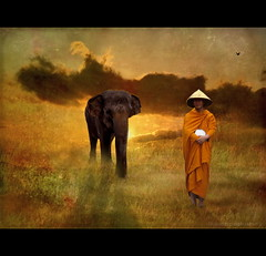 My Friend Ganesha (h.koppdelaney) Tags: life elephant colour art love digital photoshop self gold ganesha symbol magic dream monk philosophy mind strength wisdom healing dreamland cosmic consciousness shaman symbolism psychology archetype healer magicunicornverybest