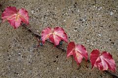 Autumnal Simplicity (283/365 10-10-09)