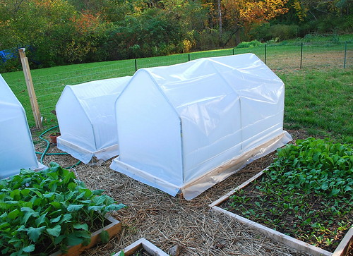 mini hoop houses 2