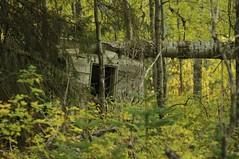 Old Rundown Cabin