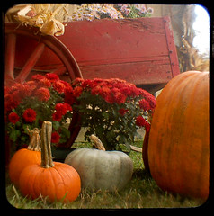(uhoh over) Tags: flowers fall square wagon pumpkins viewfinder ttv ttvf
