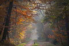 Forest path in fall (Johan_Leiden) Tags: autumn trees fall netherlands forest colours seasons herfst nederland thenetherlands bos forestpath baarn bospad seizoenen roosterbos