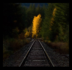 vanishing tracks into the sunset (KPEP) Tags: fallleaves sunlight traintracks olympus autumncolours hdr cedars orton yellowtree photoshopelements 2010olympics photomatix e520 kpep pse7 kpepphotography wwwkpepphotographycom kevinpepper httpwwwkpepphotographycomkpepblog