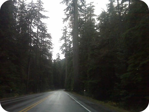 my ride home through cathedral grove