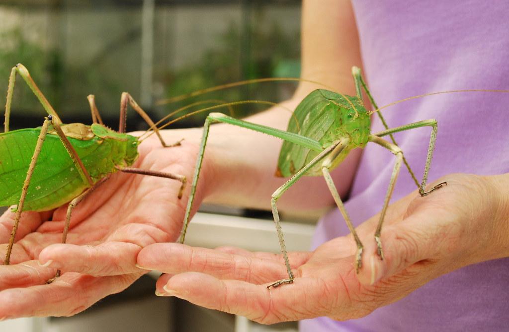 всех насекомых в мире