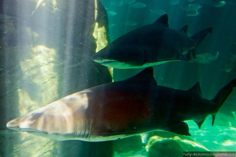 Cape Town, Two Oceans Aquarium