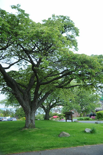 Island of trees, grassy hill, mailbox stand, stones, Blue Ridge, Seattle, Washington, USA by Wonderlane