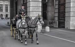 street (01) - Wien (Vlado Ferenčić) Tags: austria wien animals streetpeople street nikond90 nikkor182003556 people citiestowns cities horses vladoferencic