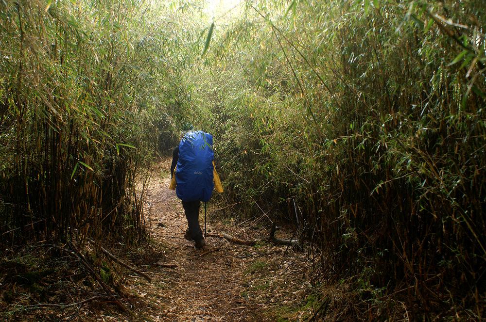 南湖大山day5-25 箭竹密林