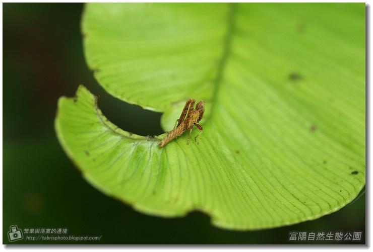 fuyang06