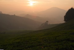 DSC_2263 (jasonlouphotography) Tags: nature sunrise cameronhighlands sgpalas