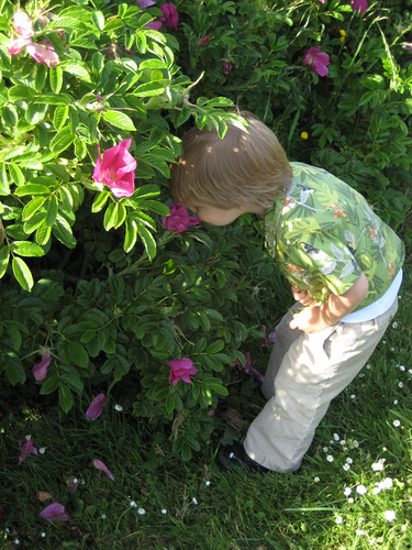 Smelling Wild Roses