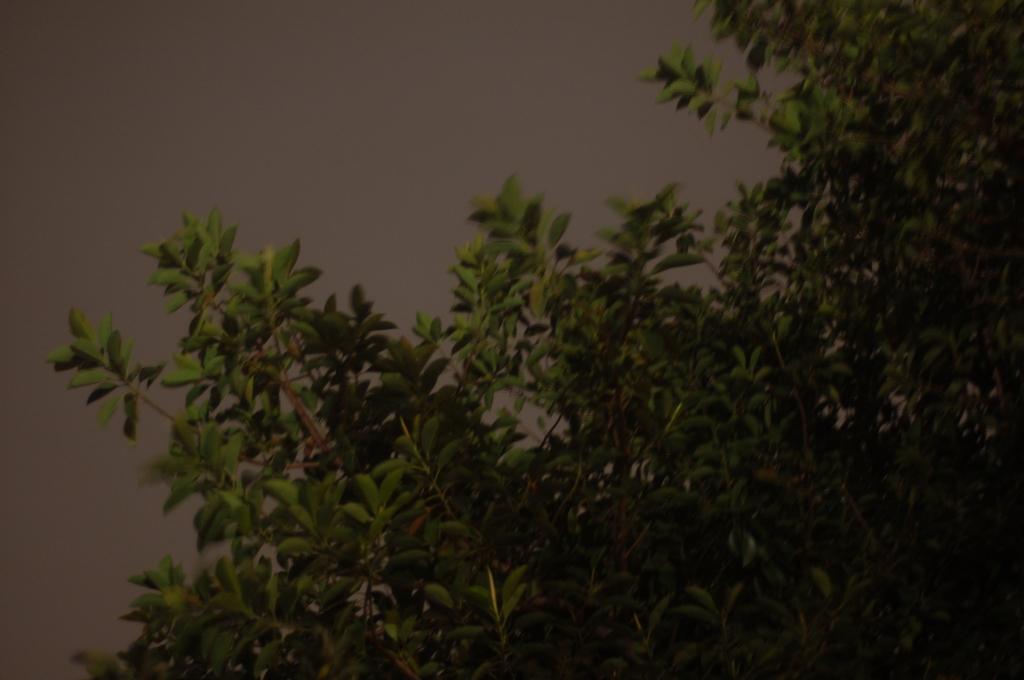 noche 09