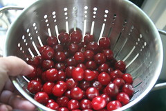 toigo sour cherries