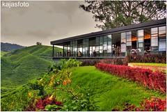 BOH Tea Centre (kajasfoto) Tags: tea centre highland cameron boh cameronhighland teacentre bohteacentre sungeipalas bohteacentrecameronhighland