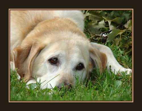 Dog Daze par fotographicpoetry