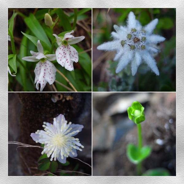 霸基潮濕處的植物