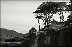 Ulva Trees (Truecraft Images) Tags: bw island scotland argyll mull isle ulva thepowerofnow